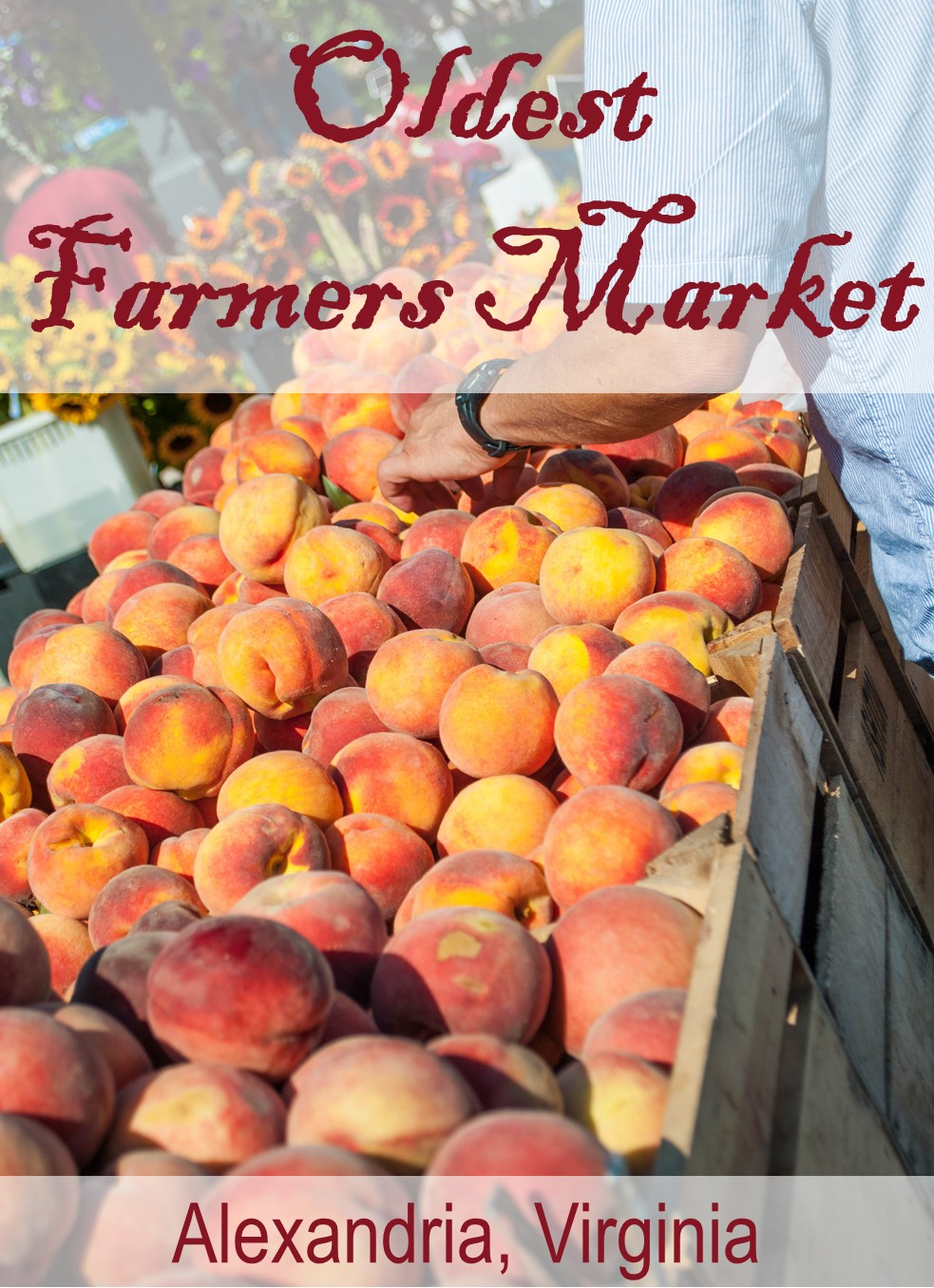 Old Town Farmers Market in Alexandria, Virginia