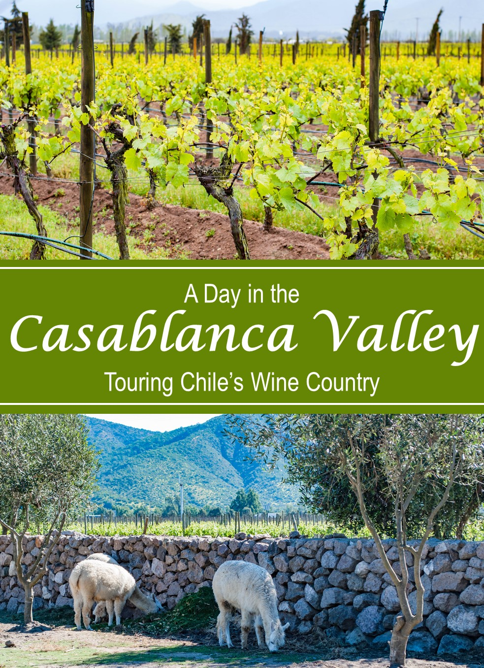 Only have one day to tour the Casablanca Valley wine region? Several companies offer tours complete with transportation, guide, and tastings at 3+ wineries!