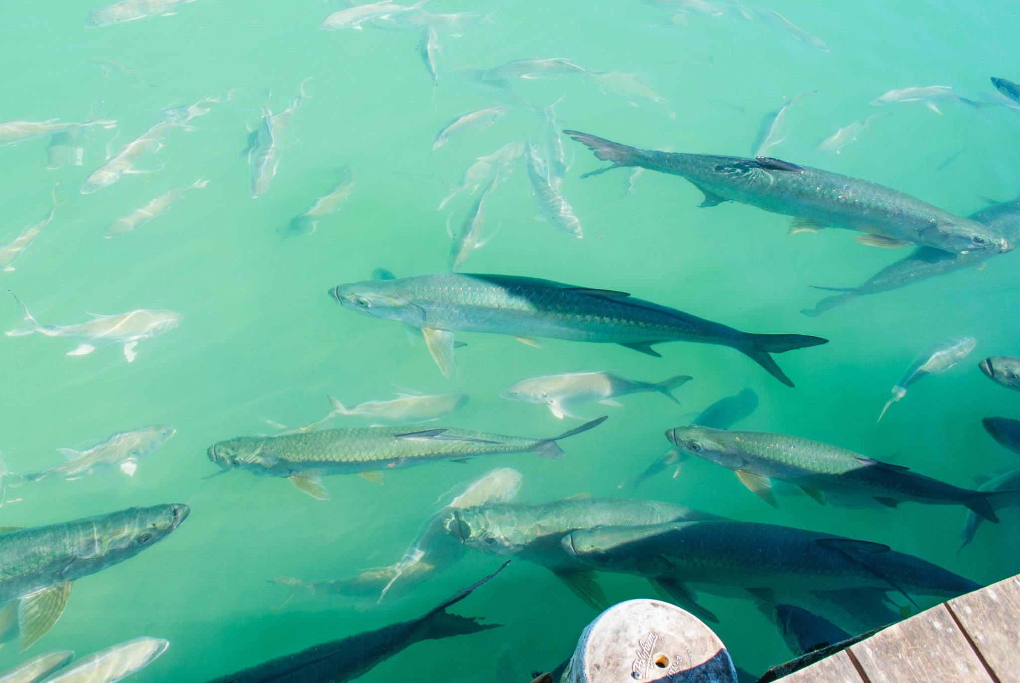Tarpons and Tourist Traps: Robbie's Marina in Islamorada, Florida